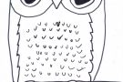 Owl by Donagh (6th)