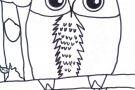 Owl by Oisín (5th)