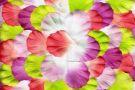 Petals by Tara (6th)